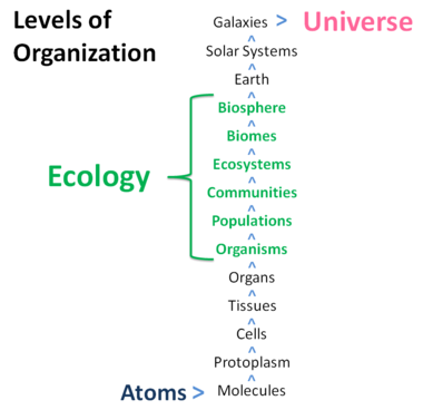 Levels of organization of Ecology